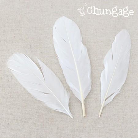 软天使翅膀羽毛白羽
